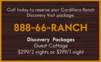 call-today-discovery-packages